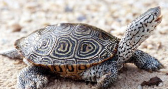 Terrapin Turtle Pet Fragile pets that can kill you are still popular ...